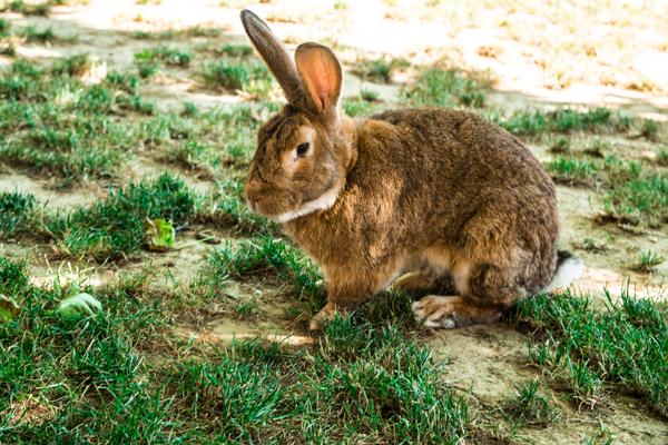 Conigli presenti nel nostro agriturismo ad Acqui Terme